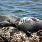 Обитатели фауны Байкала